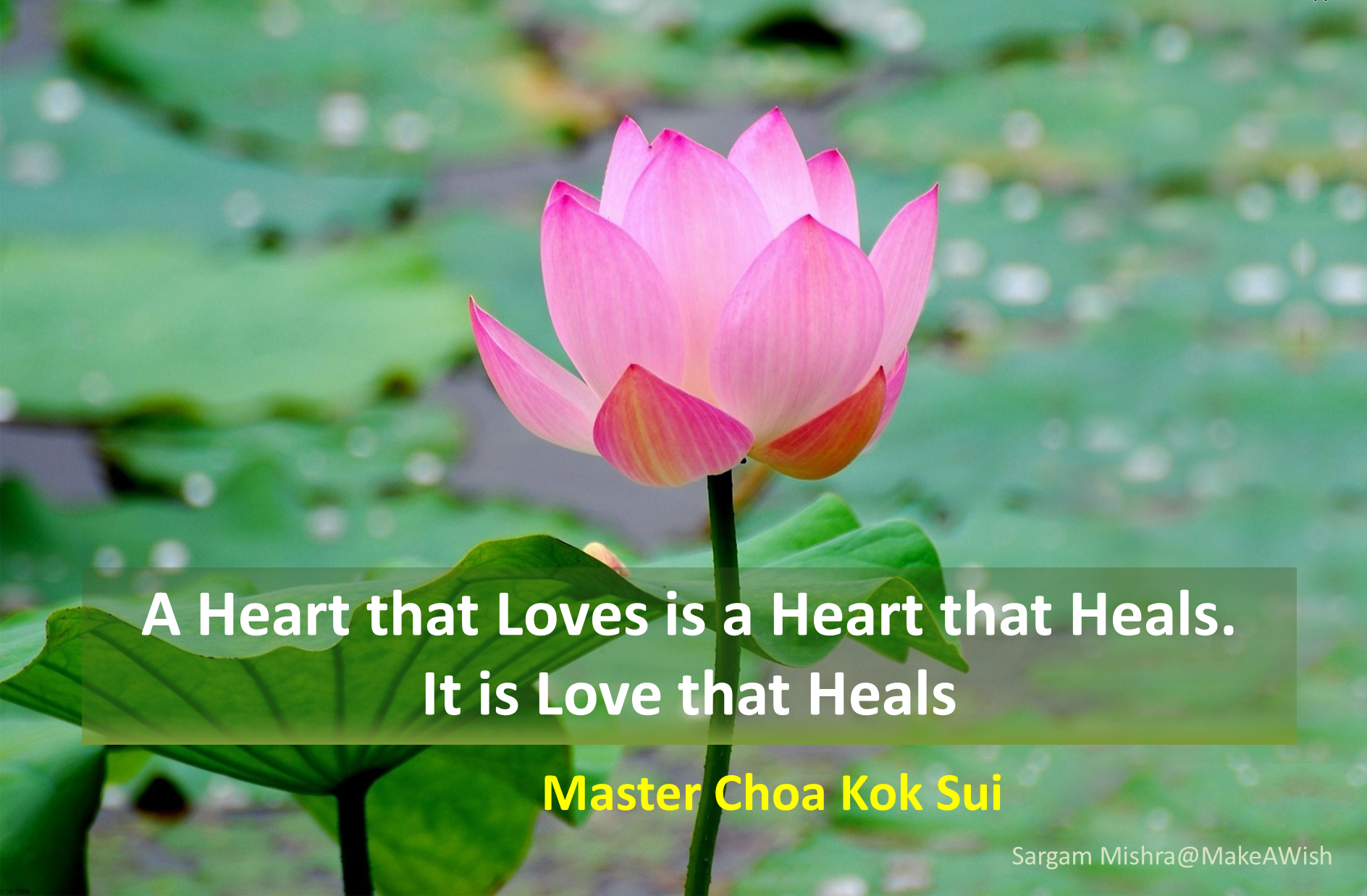 Love Heals The Heart Sargam Mishra